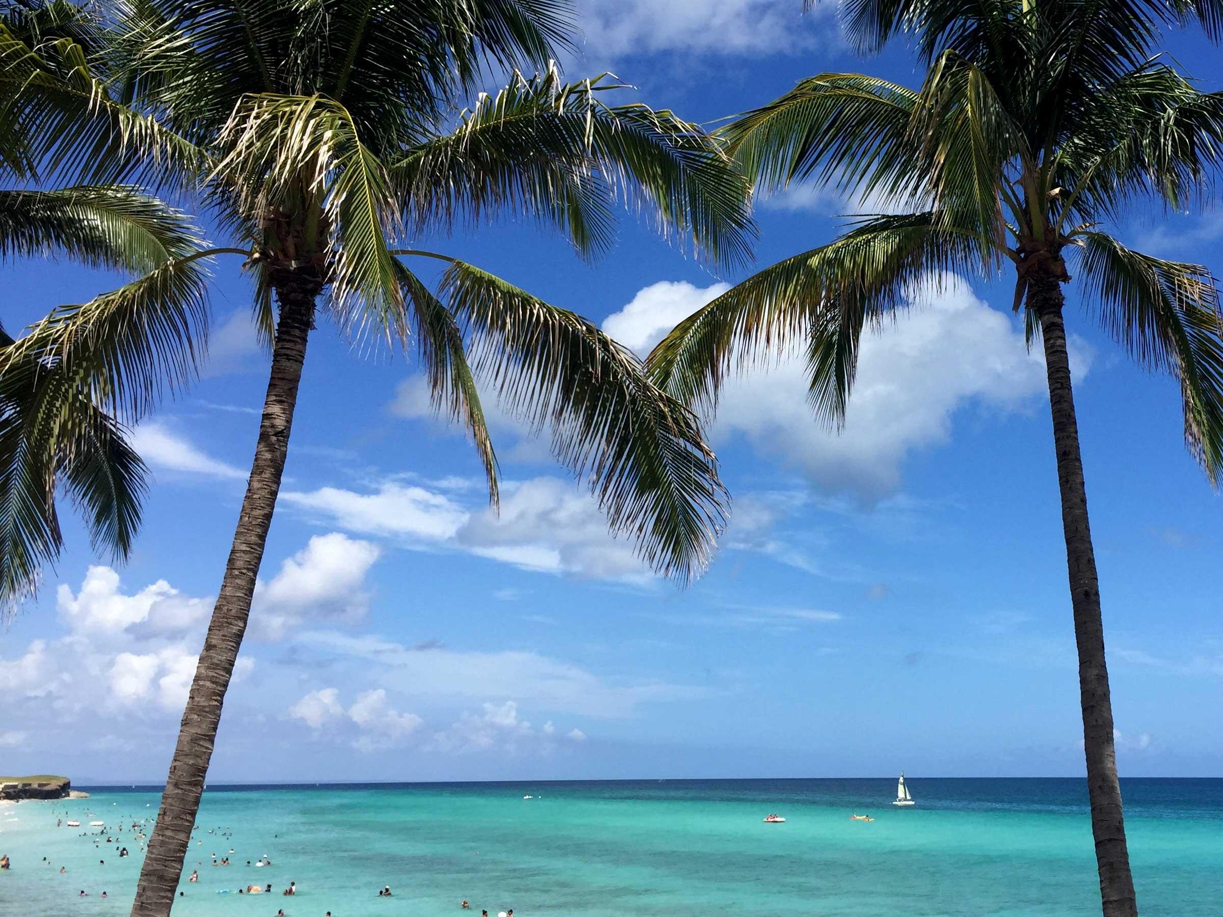 kuba Varadero-zwei-Palmen-Meerblick