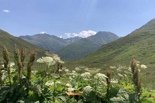 Schweizer Berglandschaft mit Blumen im Vordergrund