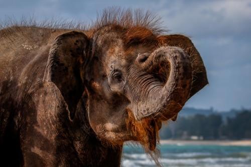 Tansania - alter - Elefant