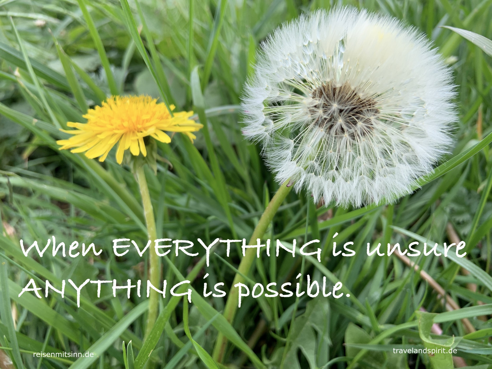 Pusteblume mit Sinnspruch-when everything is unsure, everything is possible